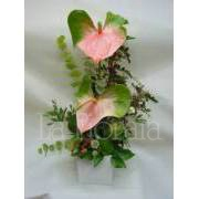 Composition of anthurium